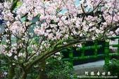 2013天元宮:1831719104.jpg