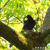2013前山公園藍鵲:1308876451.jpg
