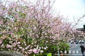 2013天元宮:1831719115.jpg