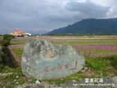 2011富里花海:1837852831.jpg