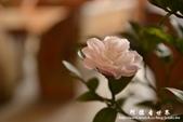2013茶花莊:1918733862.jpg