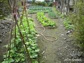 阿德老家及菜園:1895022050.jpg