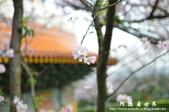 2013天元宮:1831719146.jpg