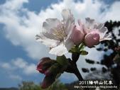 2011陽明山花季:1481334708.jpg