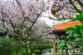 2013天元宮:1831719090.jpg