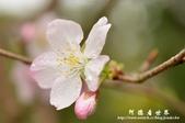2013天元宮:1831719188.jpg