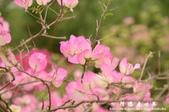 2013天元宮:1831719180.jpg