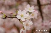 2013天元宮:1831719186.jpg