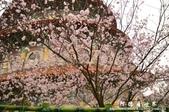 2013天元宮:1831719154.jpg