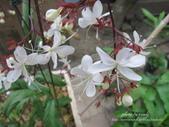 豐山生態園區-中埔鄉:1231201335.jpg