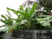 阿德老家及菜園:1895022047.jpg