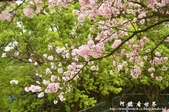 2013天元宮:1831719167.jpg