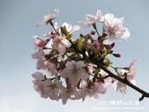 2011陽明山花季:1481334711.jpg