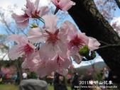 2011陽明山花季:1481334701.jpg
