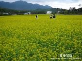 2011富里花海:1837852854.jpg
