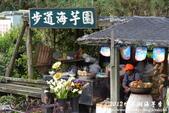 2012竹子湖海芋季:1226754836.jpg