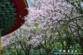 2013天元宮:1831719108.jpg
