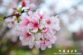 2013天元宮:1831719113.jpg