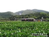 2012竹子湖海芋季:1226754830.jpg