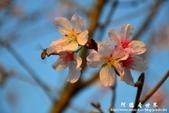2013天元宮:1831719060.jpg