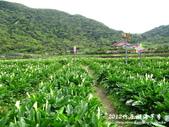 2012竹子湖海芋季:1226754827.jpg