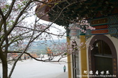 2013天元宮:1831719136.jpg