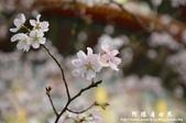 2013天元宮:1831719144.jpg