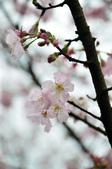 2012.03月_天元宮:DSC_7570.jpg