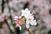 2012.03月_天元宮:DSC_7582.jpg