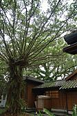 2010.11.20~21_福山植物園&林美石磐步道&蘭陽博物館:DSC_0042.JPG
