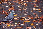 2007 亞洲職棒大賽東京3天2夜之旅_day.2_上野公園:上野公園,鴿子也是不怕人的