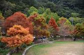 2013.11.17_武陵農場:DSC_9377.jpg