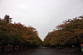 2007 亞洲職棒大賽東京3天2夜之旅_day.2_上野公園:上野公園,開始有楓紅了