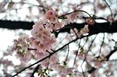 2012.03月_天元宮:DSC_7640.jpg