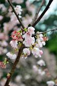 2012.03月_天元宮:DSC_7602.jpg