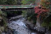 2013.11.17_武陵農場:DSC_9420.jpg