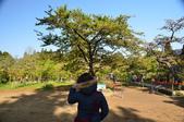 2012_阿里山櫻花季:DSC_8220.jpg