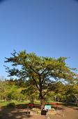 2012_阿里山櫻花季:DSC_8221.jpg