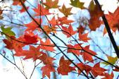 2013.11.17_武陵農場:DSC_9392.jpg
