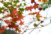 2013.11.17_武陵農場:DSC_9386.jpg