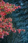 2013.11.17_武陵農場:DSC_9433.jpg