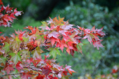 2013.11.17_武陵農場:DSC_9448.jpg