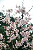 2012.03月_天元宮:DSC_7614.jpg