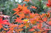 2013.11.17_武陵農場:DSC_9453.jpg
