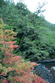 2013.11.17_武陵農場:DSC_9451.jpg