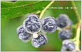 Xuite活動投稿相簿:愛現花遊記-薄膜下的星光