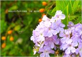 台南:IMG_3814-1.jpg