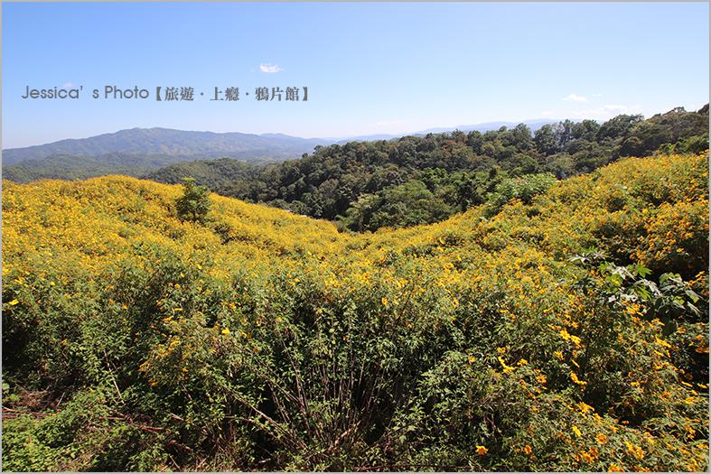 泰北:IMG_6646.jpg