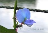 新北:IMG_4724.jpg