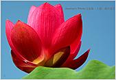 Xuite活動投稿相簿:愛現花遊記-藍天、嫩紅
